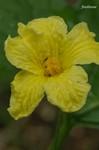 20070624nigauri_027.jpg