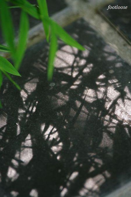 20090727_003.jpg